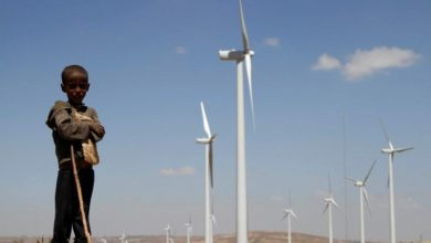 Green growth: Africa chooses renewables